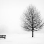 Bench and tree by Bill Allsopp