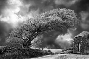 Bent Tree by Bill Allsopp