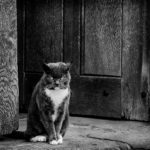 Church Door Guardian by Jackie Fisher