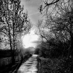 Leading you down the path by Lisa Cooper