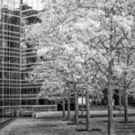 Paris Infra red by Andrew Cooper