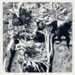 Sunflowers by Jackie Fisher
