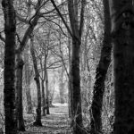 West Bridgford Woods by Lisa CooperV2
